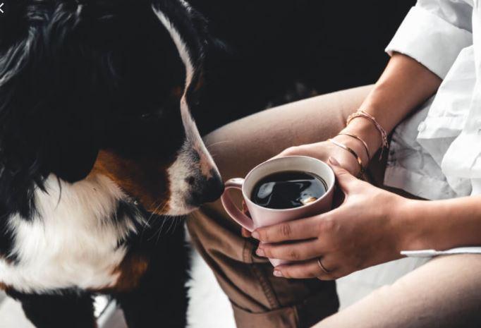 Mogen honden koffiebonen eten